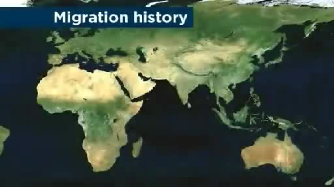 Out of Africa; Aboriginal DNA provides Human migration clues of early African Migration.
